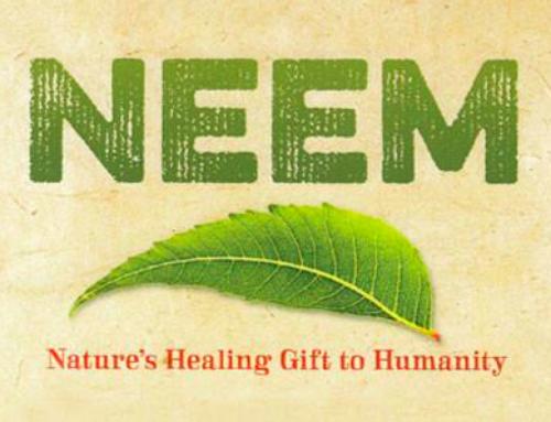 """Les avantages et les utilisations du Neem, la """"Feuille des Merveilles"""""""