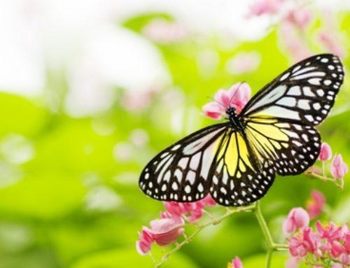 Détoxifier le corps naturellement- 5 choses que vous pouvez faire chez vous